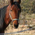 konie drucha