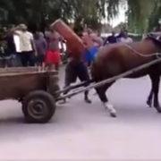 Konie przeciąganie liny