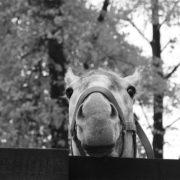 Silver koń fundacja Tara