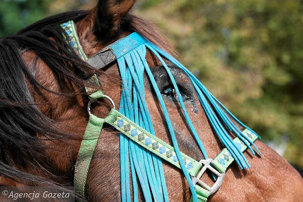 Niewidomy koń