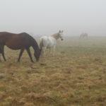 konie we mgle4