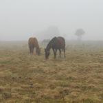 konie we mgle3