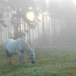 konie we mgle17