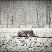 tarzanie w zimie