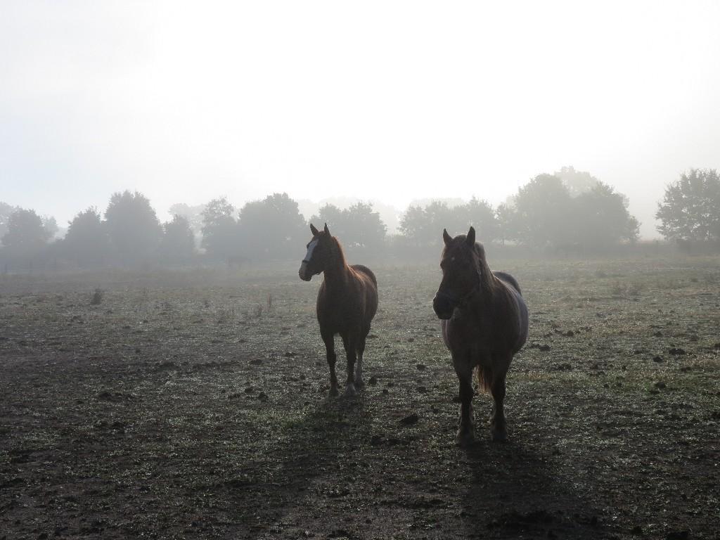 konie we mgle