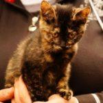 milusiński kot4