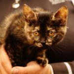 milusiński kot2
