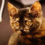 milusiński kot1