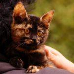 milusiński kot3