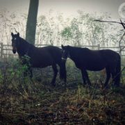 miłośc koni