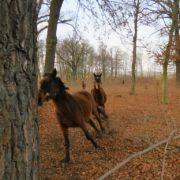konie-w-parku-10