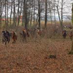 konie-w-parku-5