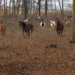 konie-w-parku-7