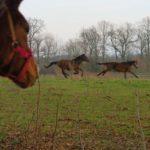 konie-w-parku-8
