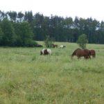 pastwiska