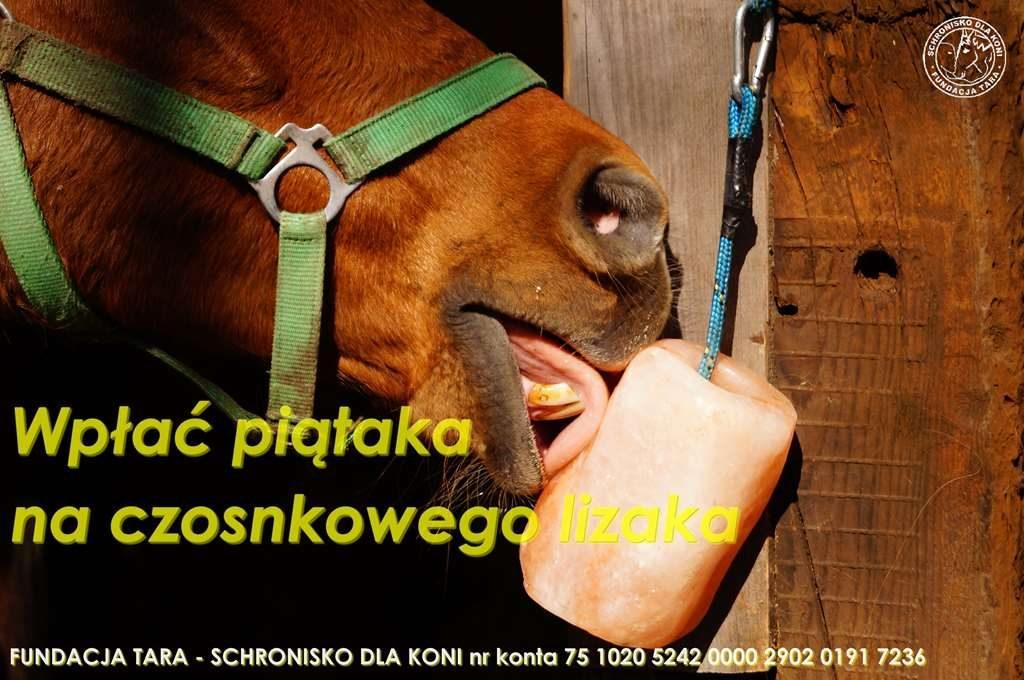 lizawka
