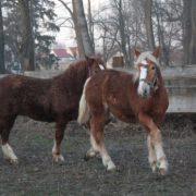 Skaryszewiaki