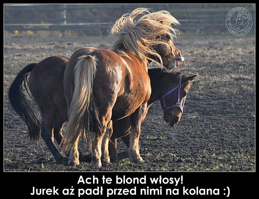 blondyna