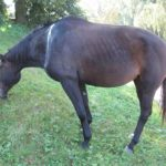 Poszukiwany koń