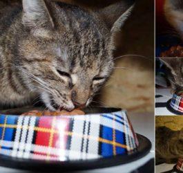 Jedzące koty