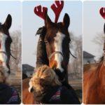 konie jak renifery