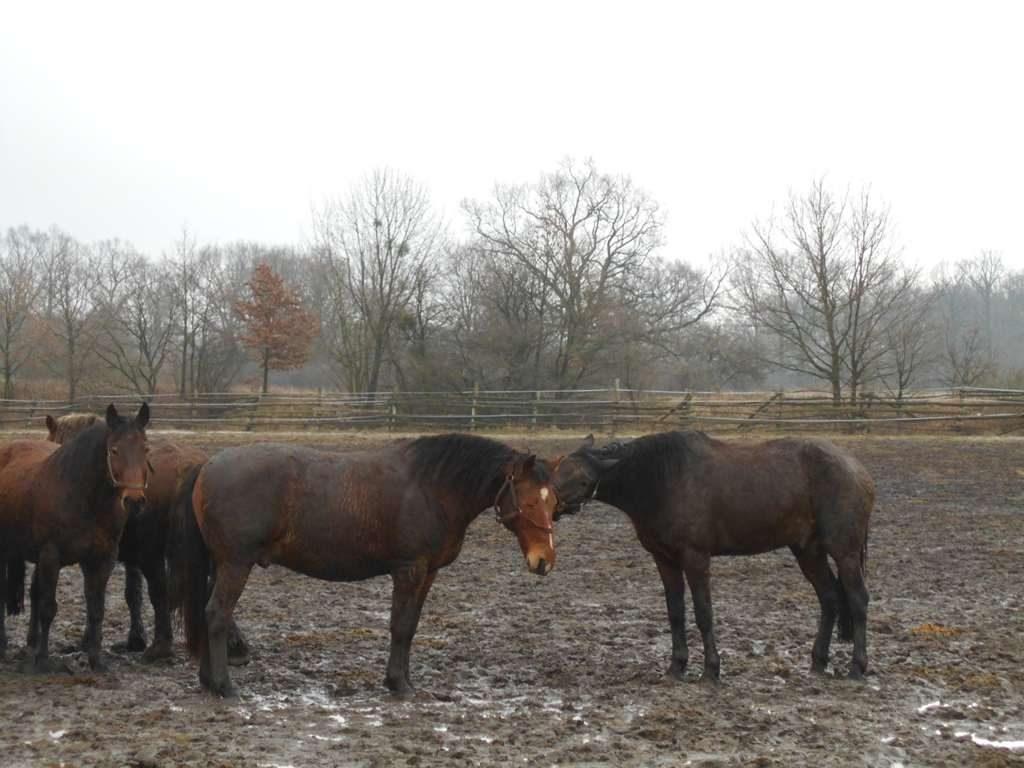 Błotne konie