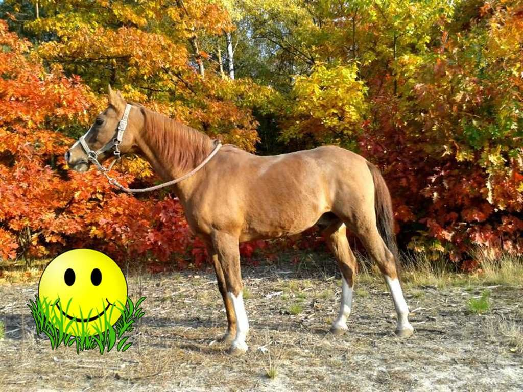 Koń Faon