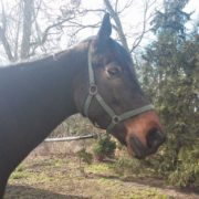 koń grom