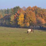 Jesienna Tara