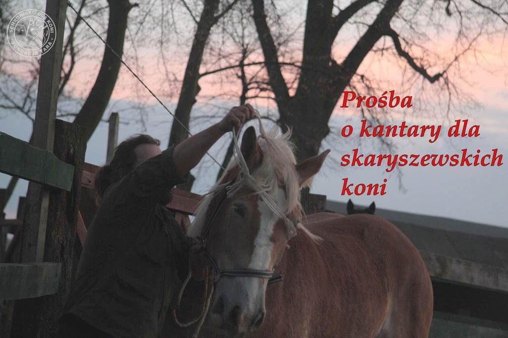 Kantary dla koni