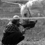 Koń szuka domu
