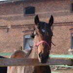 zabiegi u koni