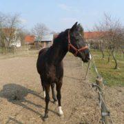 Poszukiwany dom dla koni