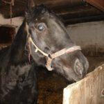 dom dla konia