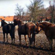kolejka koni