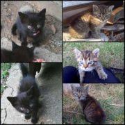 Koty szukają domu