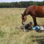 Struganie koni