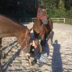 Konie z licytacji