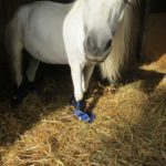 Buciki dla konia