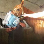 inhalacja konia