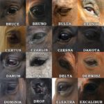 Oczy koni