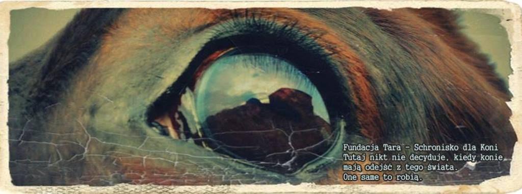 Oko Kandera