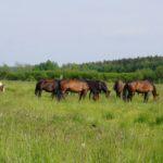 Koński raj