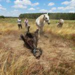 Konie na łące