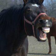 Uśmiechy zwierząt