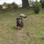 Latające psy