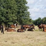 Odpoczynek koni