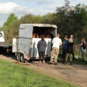 transport koni