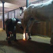 badanie konia