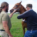 Leczenie koni